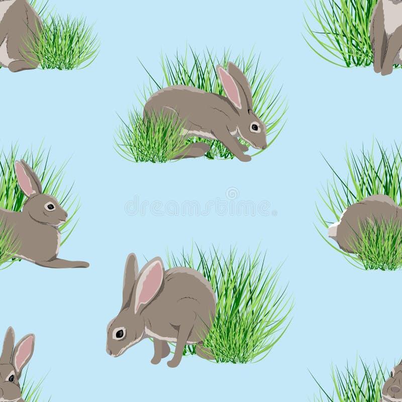 seamless modell Realistiska hare i grönt gräs Vår i Europa och Amerika vektor illustrationer