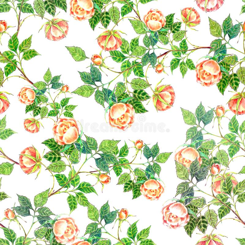 Seamless patter watercolor branch roses. Seamless patter rose background watercolor background bouquet branch handmade retro romantic royalty free illustration