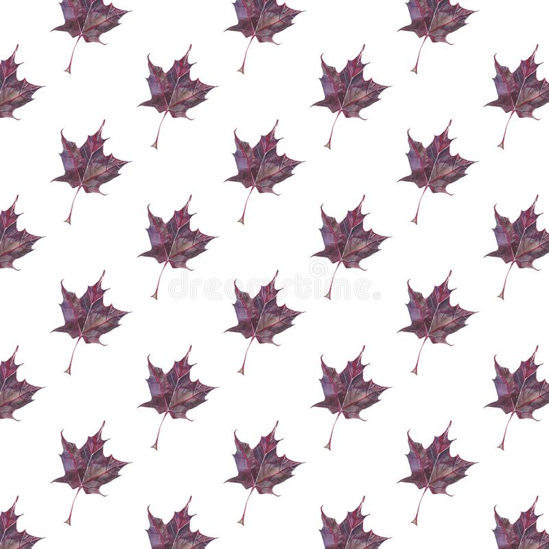 Seamless pattern with autumn dark-red maple leaves royalty free illustration