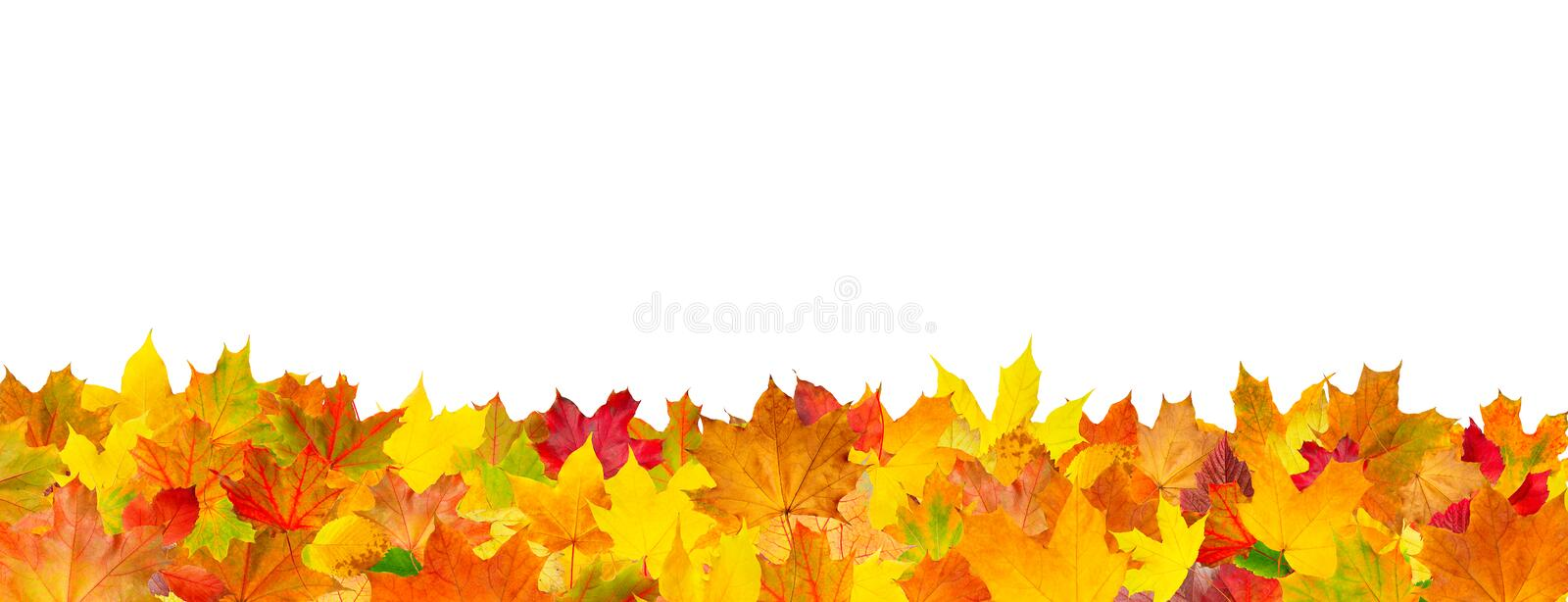 Seamless pattern of autumn leaves horizontal background. Seamless pattern of autumn leaves, lying on the ground stock image