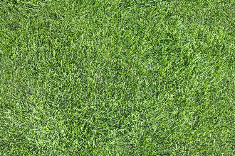Seamless pattern. A beautiful green lawn grass texture. royalty free stock image