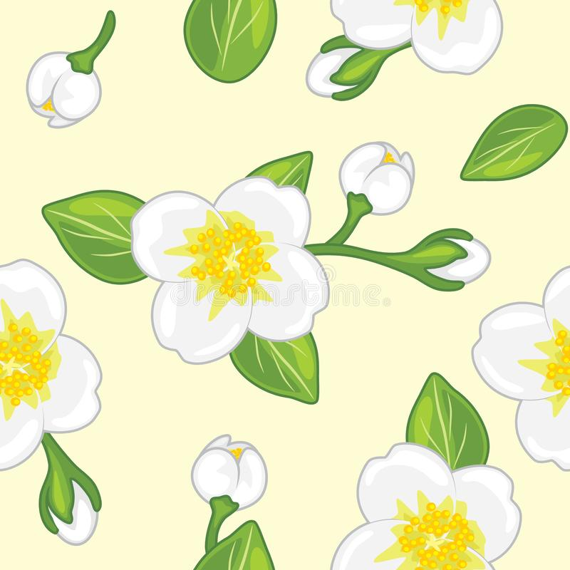 Seamless pattern with blooming jasmine royalty free stock photography