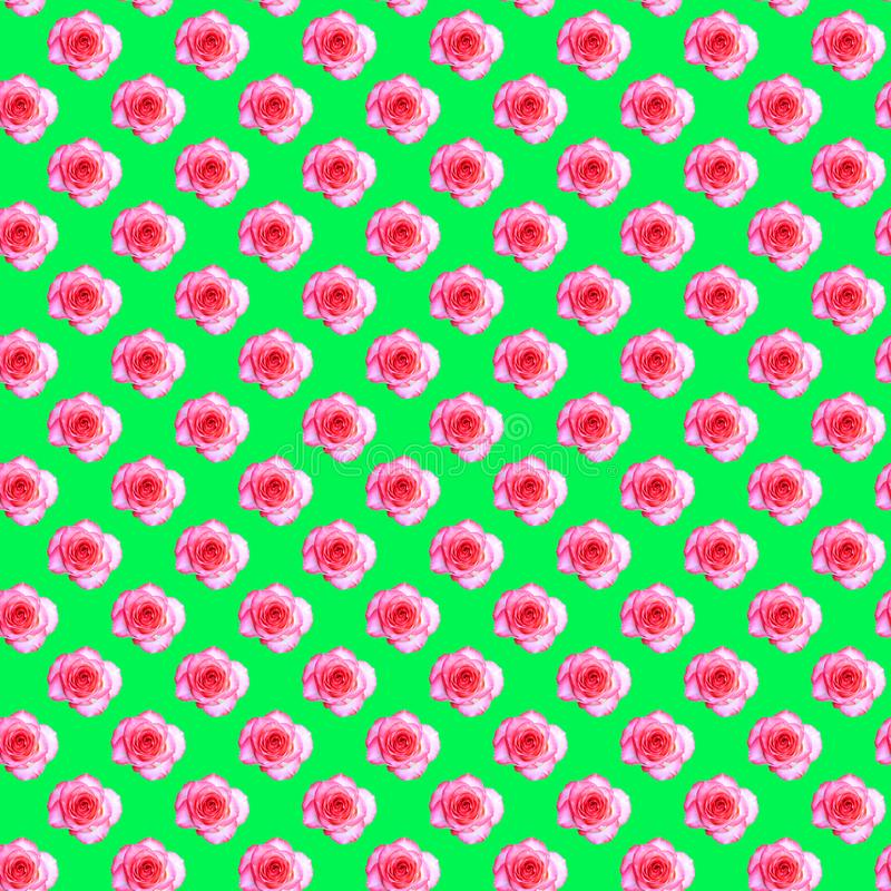 Seamless pattern with a blooming rose bud on a light green background. Modern style isometric concept royalty free stock image