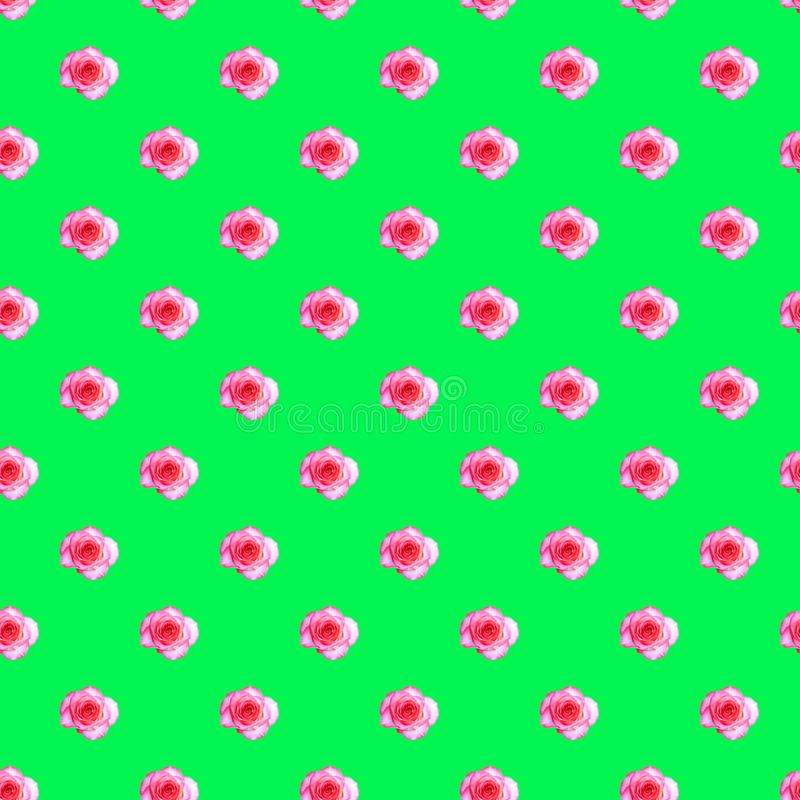 Seamless pattern with blooming rose bud on a light green background. Modern style isometric concept.  royalty free stock image