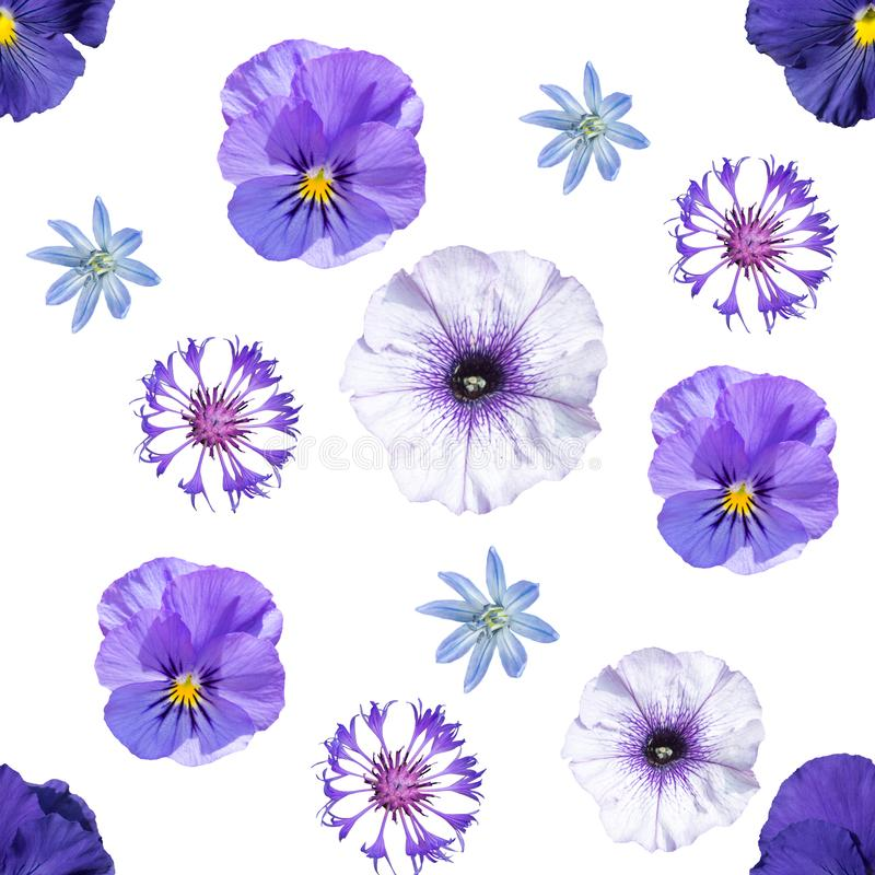 Seamless pattern with blue and violet flowers vector illustration