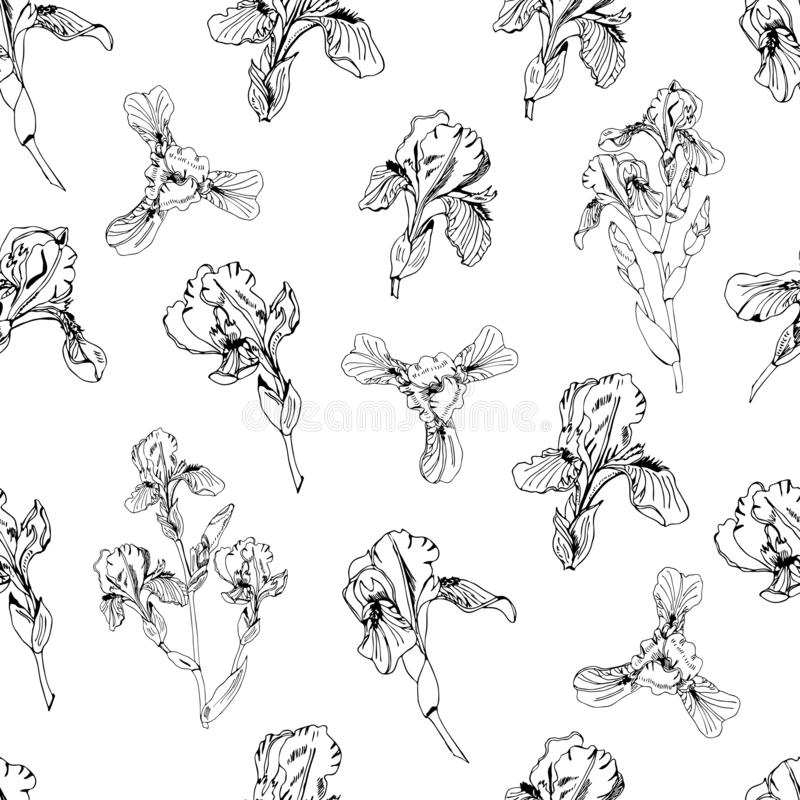 Seamless pattern with bouquet and single buds of iris flowers. Hand drawn ink sketch. Monochrome objects. Seamless pattern with bouquet and single buds of iris royalty free illustration