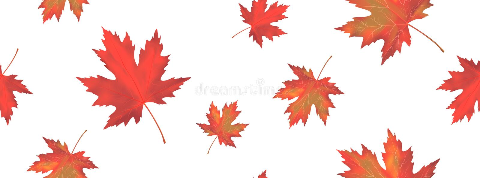 Seamless pattern with bright orange red falling maple leaves isolated on white background. Seasonal banner or holiday vintage stock illustration