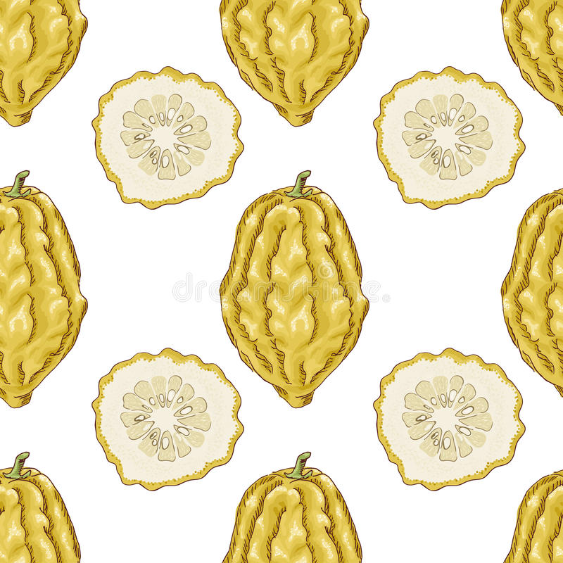 Seamless pattern with citron. Vector illustration for your design stock illustration