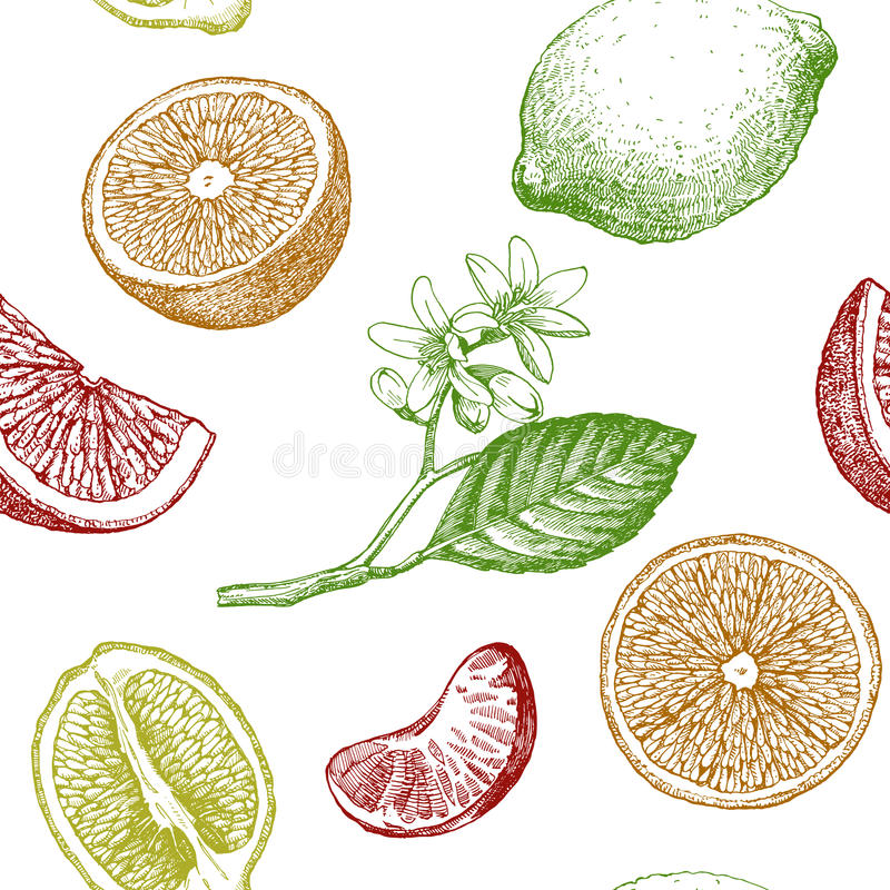 Seamless pattern with citrus fruits. Vector lemon. Hand drawn illustration royalty free illustration