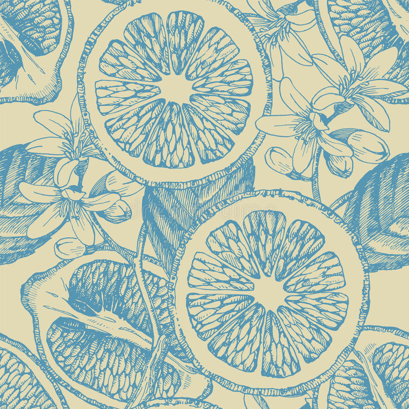 Seamless pattern with citrus fruits. Vector lemon. Hand drawn illustration stock illustration