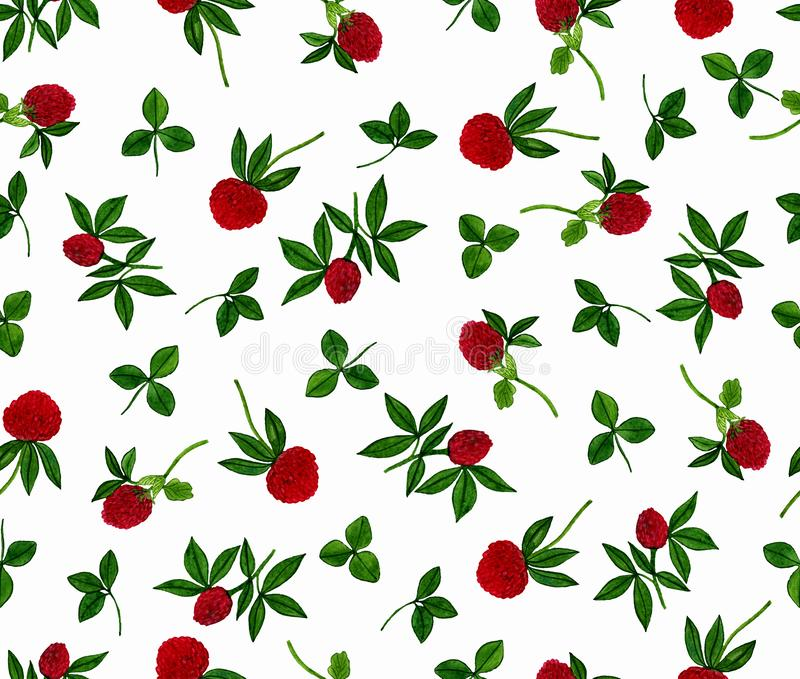 Seamless pattern with clover flowers on a white background. Watercolour hand painted. stock illustration