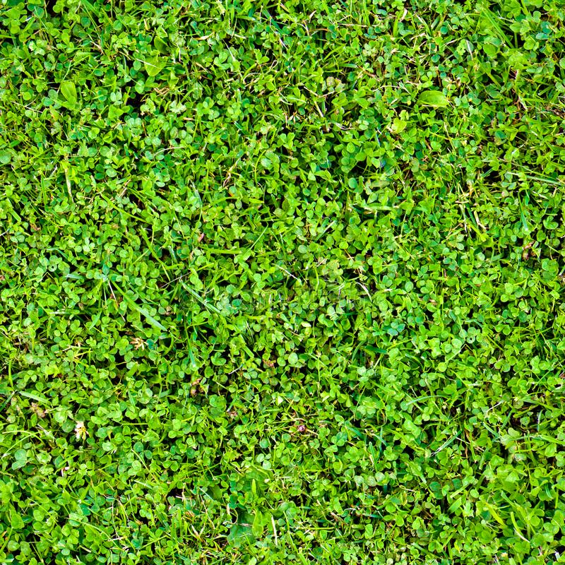 Seamless pattern of clover leaves and grass. Bright juicy greens. Grass carpet. Summer background stock photo