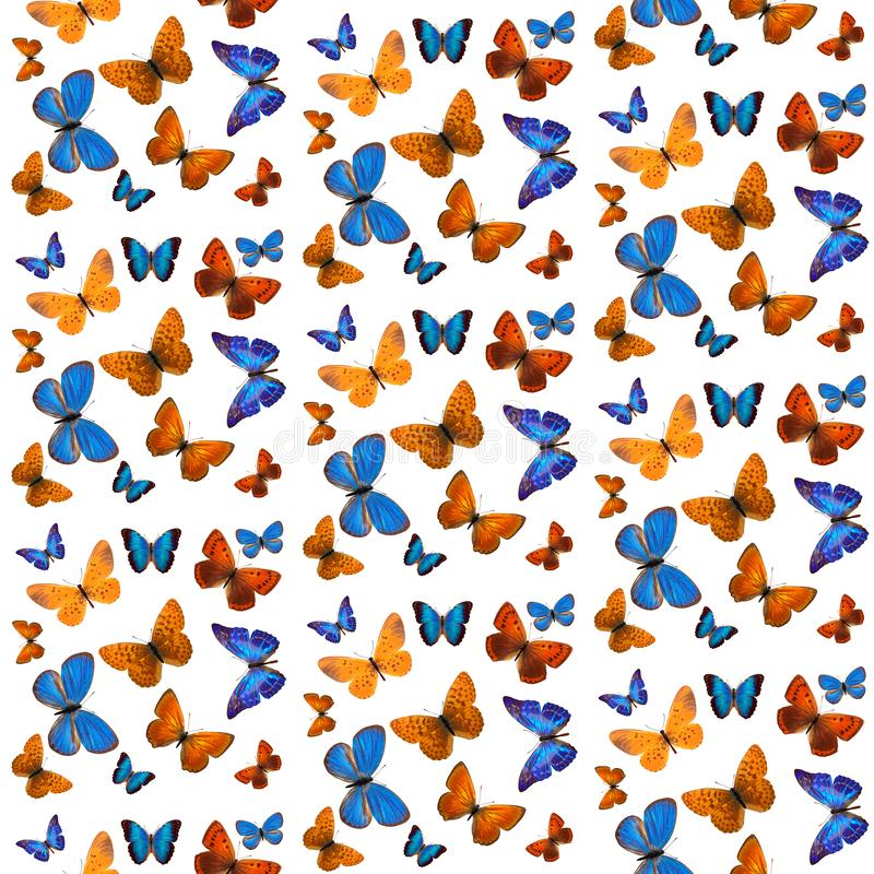 Seamless pattern of colored tropical butterflies isolated on white background. Seamless pattern of colored butterflies isolated on white background stock photography