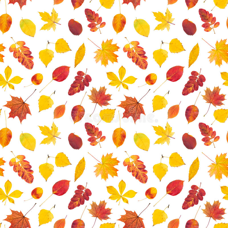 Seamless pattern with colorful autumn leaves royalty free stock photography