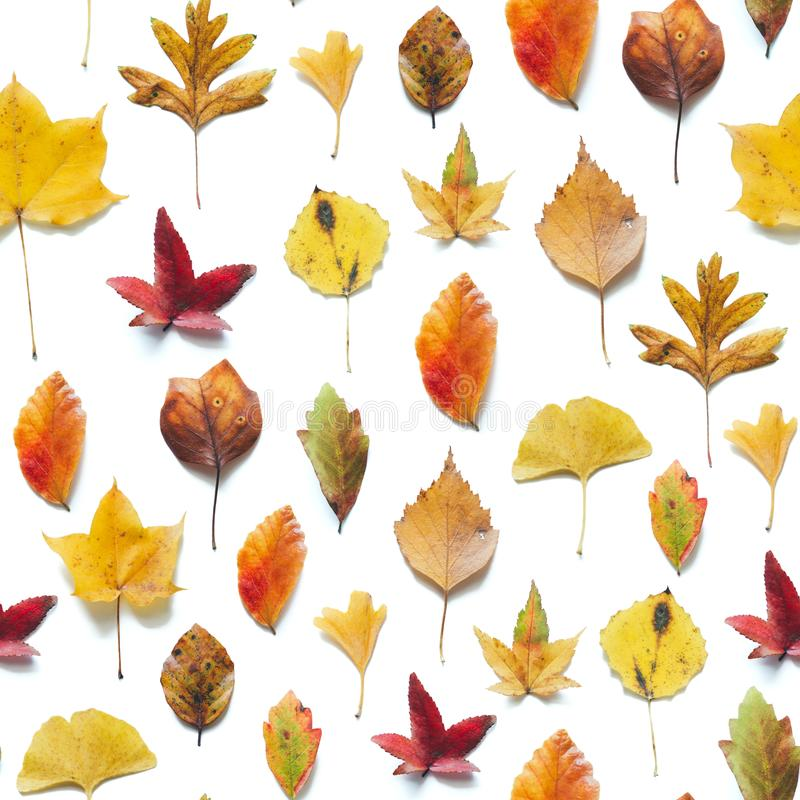 Seamless Pattern With Colorful Autumn Leaves stock image