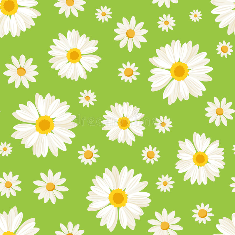 Seamless pattern with daisy flowers on green. Vect stock illustration