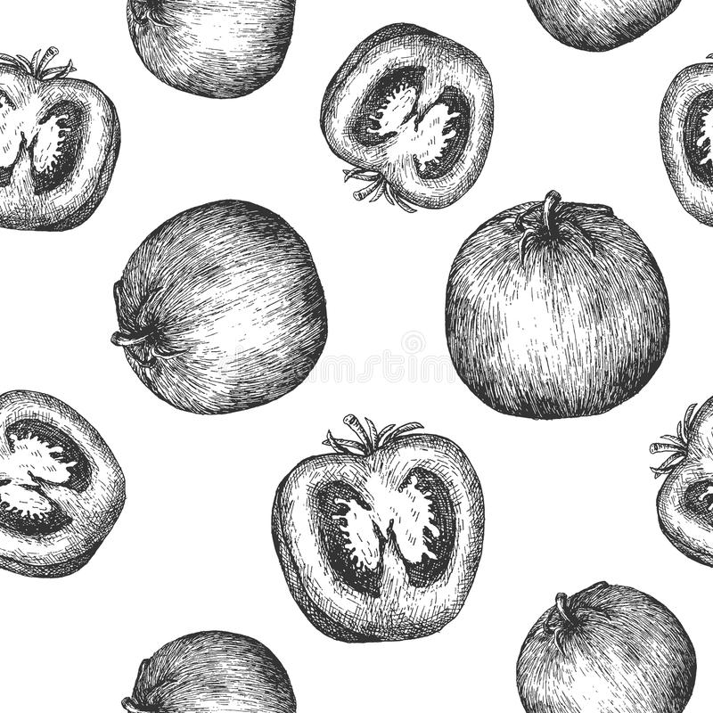 Seamless pattern design or background with tomato. Hand drawn illustration by ink and pen sketch. Can use for fruit and vegetable products and health care goods vector illustration