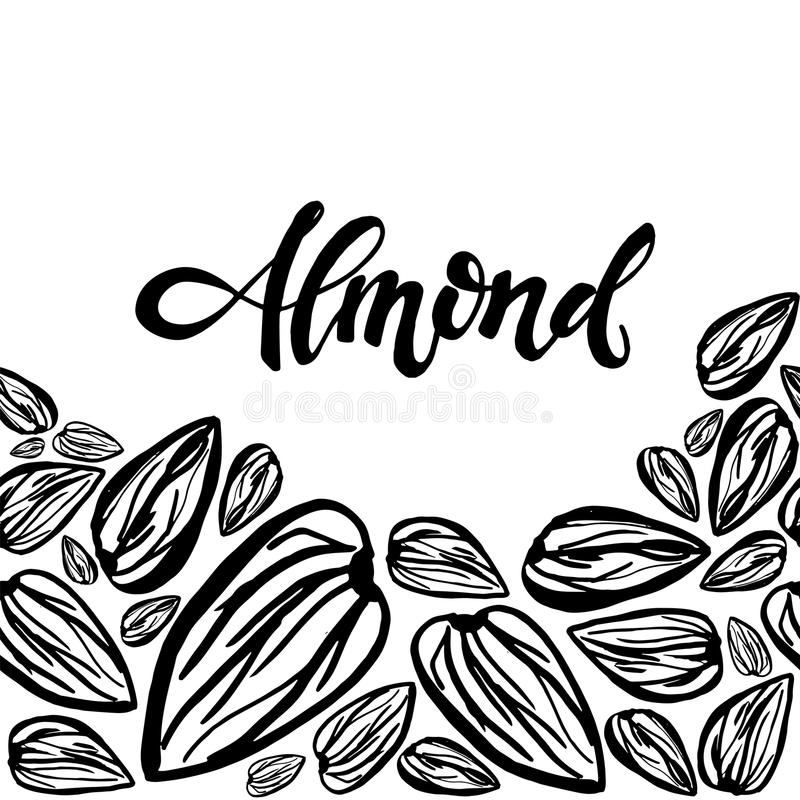 Sketch almonds pattern on white background. Seamless pattern with dried almonds on white background. Cute doodle illustration stock illustration