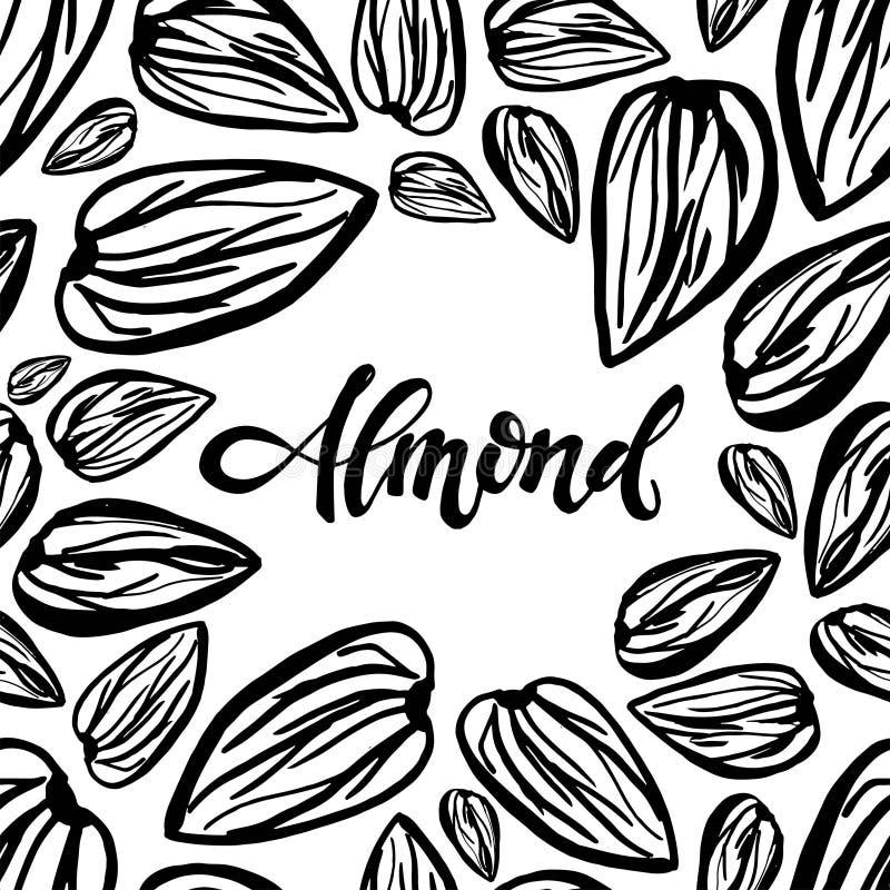 Sketch almonds pattern on white background. Seamless pattern with dried almonds on white background. Cute doodle illustration vector illustration