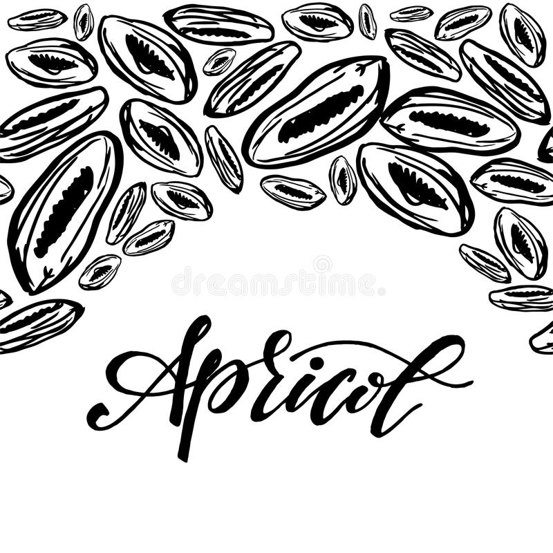 Dried apricots pattern on white background. Seamless pattern with dried apricots on white background. Cute doodle illustration vector illustration
