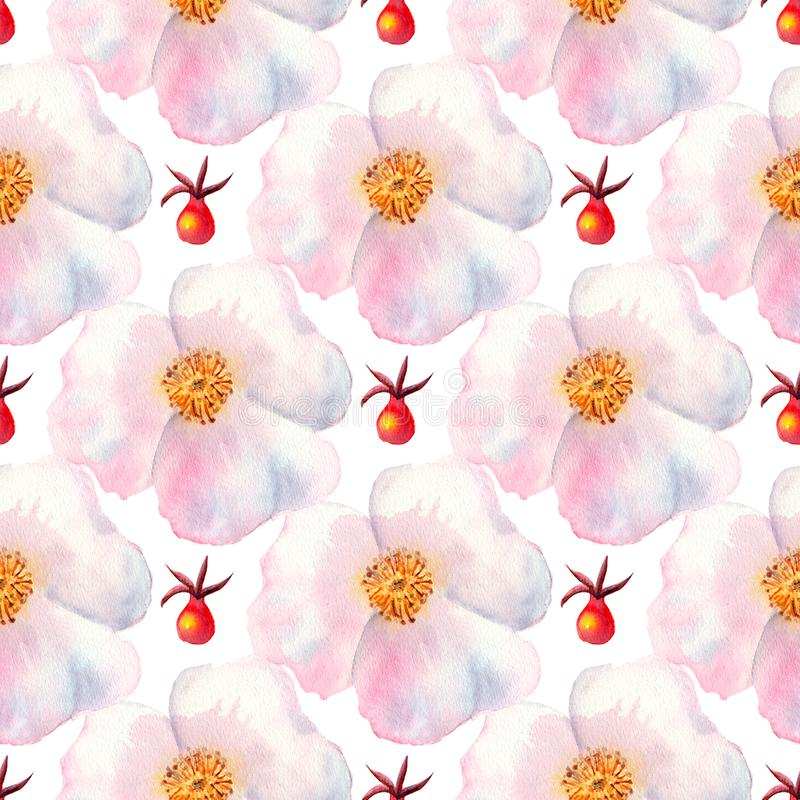 Seamless pattern. Flowers and fruits of rose hips Watercolor. Flower illustrations. Bohemian bouquets of flowers, wreaths, wedding royalty free illustration