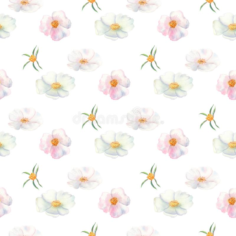Seamless pattern. Flowers and fruits of rose hips Watercolor. Flower illustrations. Bohemian bouquets of flowers, wreaths, wedding stock illustration