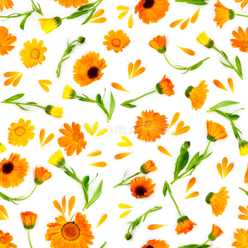 Seamless pattern with flowers marigold isolated on white background. Flat lay composition. Love concept royalty free stock images