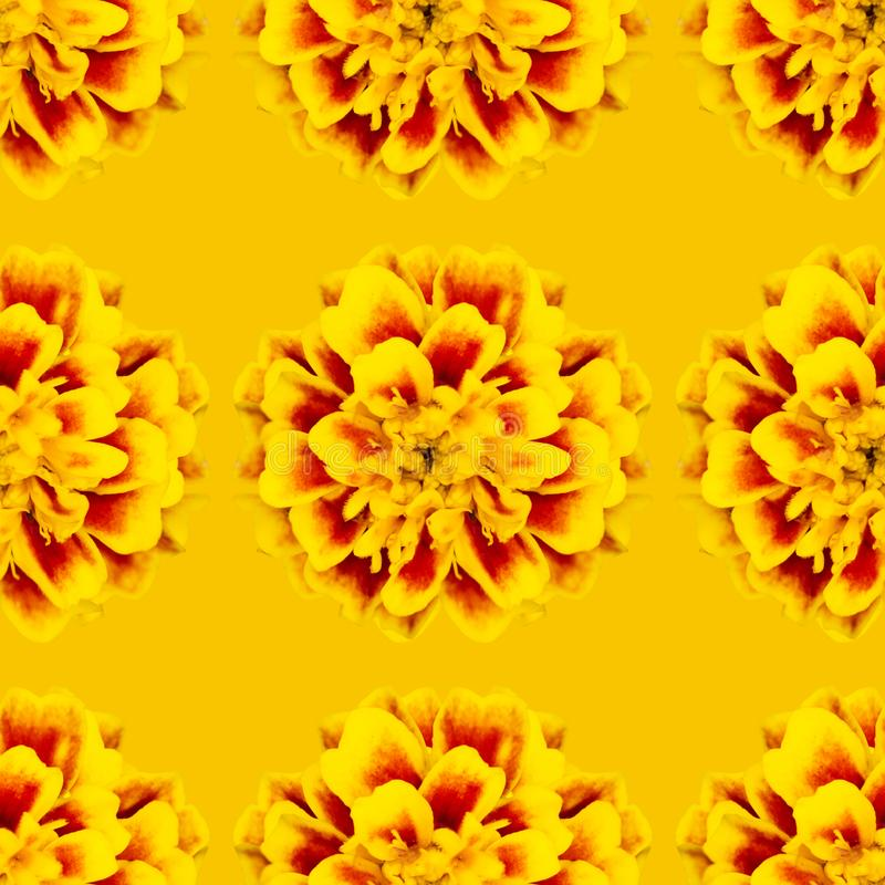 Seamless pattern of flowers tagetes patula. Bright seamless pattern of flowers tagetes patula, wallpaper, floral, background, summer, plant, fashion, spring stock image