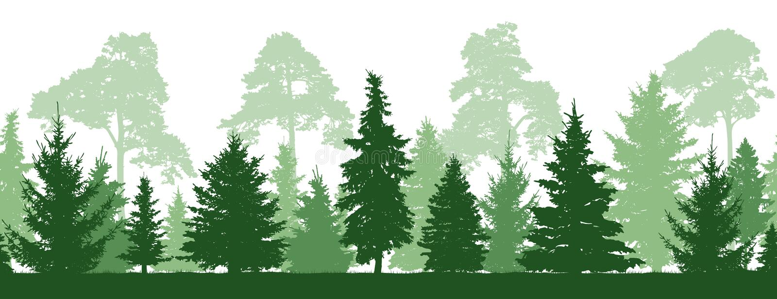 Seamless pattern of forest firs, pines trees, silhouette. Vector vector illustration