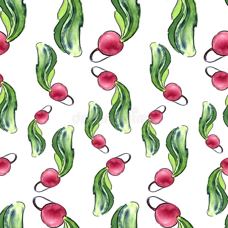 Seamless pattern of fresh radishes with tops. Hand drawn watercolor illustration on white background. Seamless pattern of fresh radishes with tops. Hand drawn royalty free illustration
