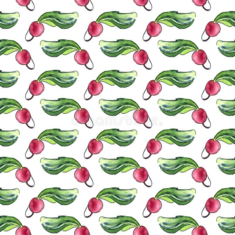 Seamless pattern of fresh radishes with tops. Hand drawn watercolor illustration on white background. Seamless pattern of fresh radishes with tops. Hand drawn vector illustration