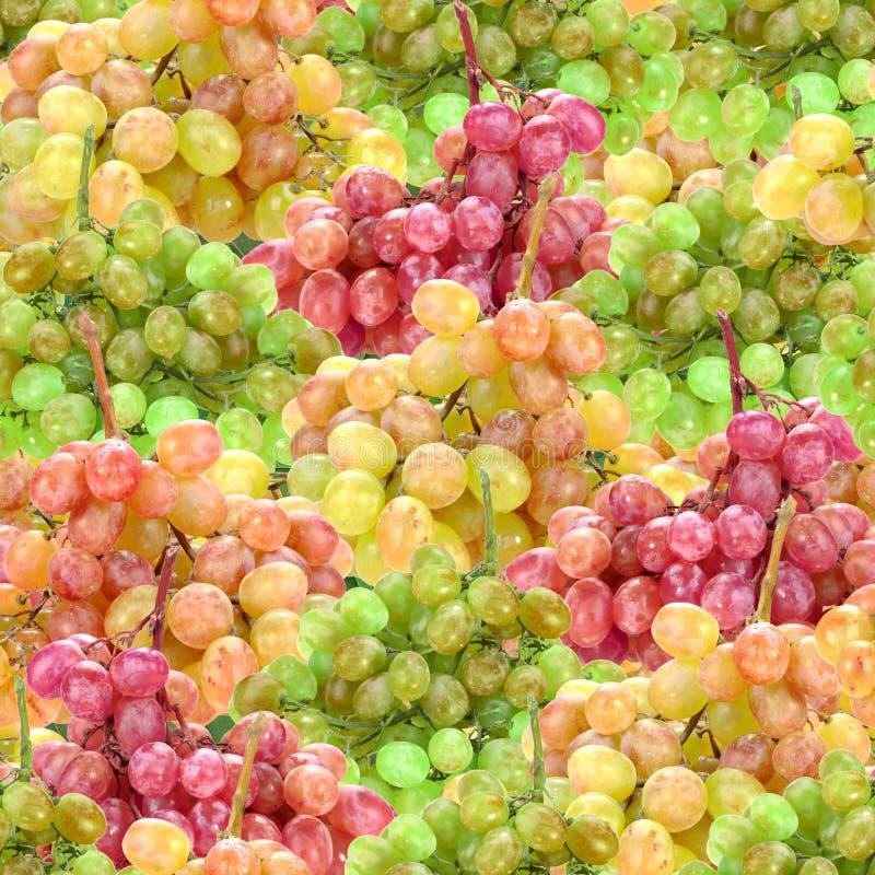 Download Seamless Pattern Of Fresh Ripe Motley Grape Stock Photo - Image: 24860336