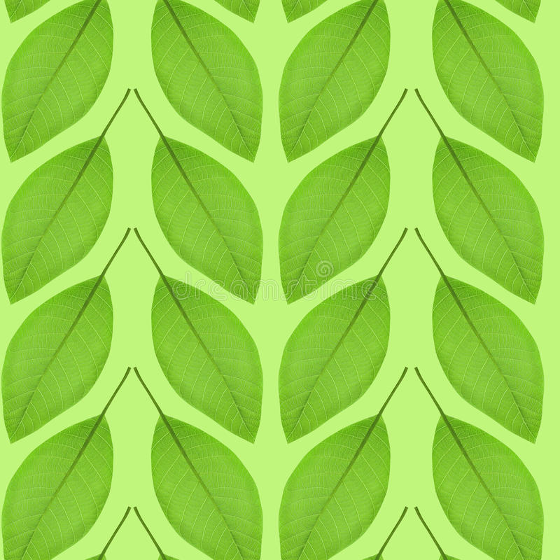 Seamless pattern of green leaves on a green background royalty free stock photo