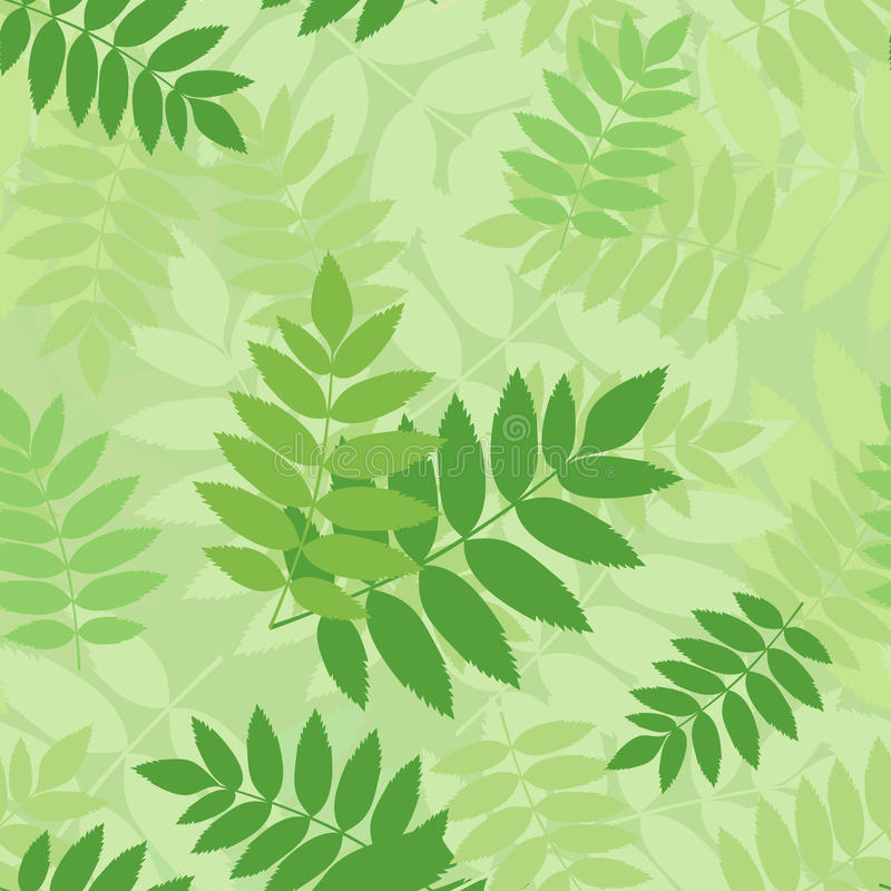 Download Vector Seamless Pattern With Green Rowan Leaves. Stock Vector - Illustration: 29668690