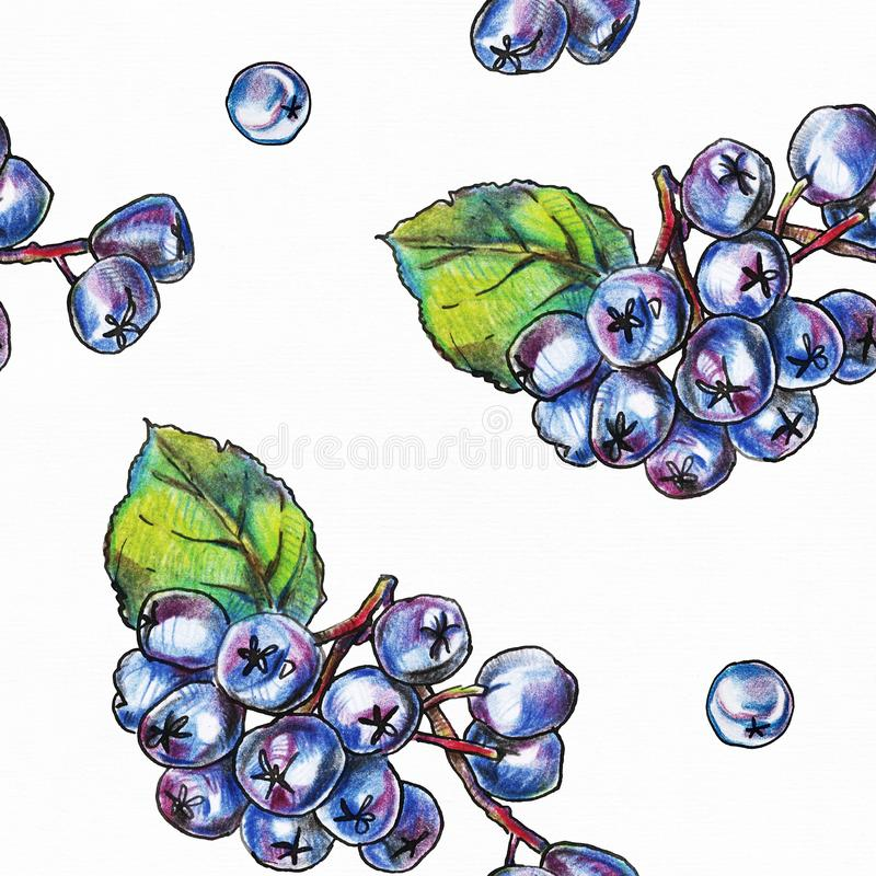 Seamless pattern with hand drawn black chokeberry berries on white textured paper. stock illustration