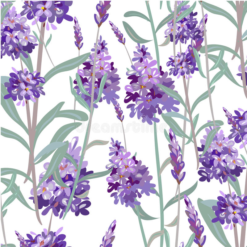 Seamless pattern with hand drawn lavender vector illustration