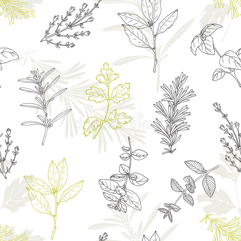 Seamless pattern with hand drawn spicy herbs. Culinary kitchen background. With fresh seasoning in sketch stile. Vector illustration stock illustration