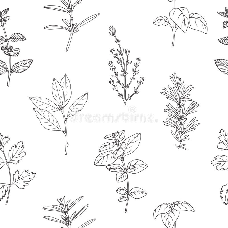 Seamless pattern with hand drawn spicy herbs. Monochrome kitchen background. Seamless pattern with hand drawn spicy herbs. Black and white kitchen background royalty free illustration