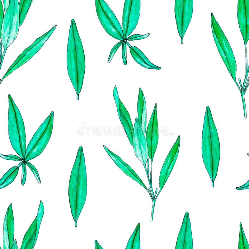 Seamless pattern with hand painted watercolor sage isolated on white. Repeating background with herbs for textile, packaging or scrapbooking royalty free illustration