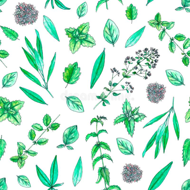 Seamless pattern with hand painted watercolor sage, mint, balm, oregano isolated on white. Repeating background with tea herbs for textile, packaging or royalty free illustration