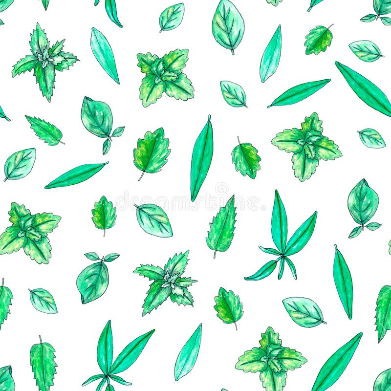 Seamless pattern with hand painted watercolor herbs. Seamless pattern with hand painted watercolor sage, mint, balm, oregano leaves isolated on white. Repeating stock illustration