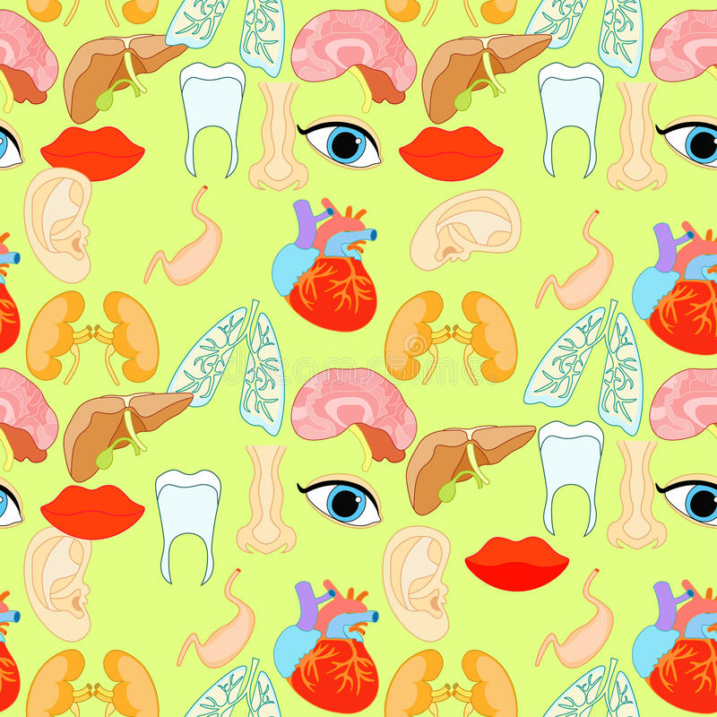 Seamless pattern with a human heart organ, lungs, liver, eyes, e vector illustration