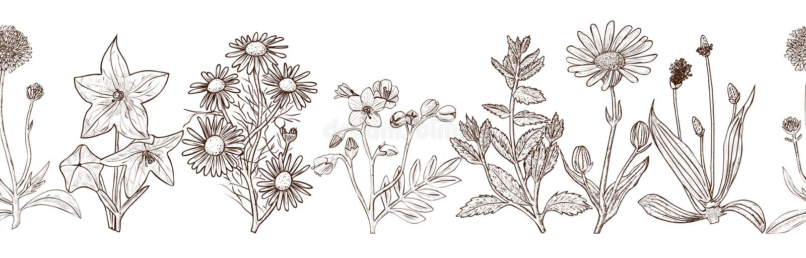 Seamless pattern with ink hand drawn medicinal herbs royalty free stock images