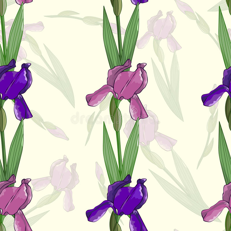 Seamless pattern with irises flowers royalty free illustration