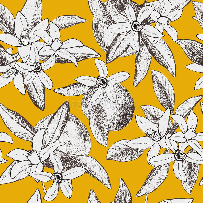 Seamless pattern of isolated hand drawn oranges and flowers in s. Ketch style on yellow background. Vector illustration stock illustration