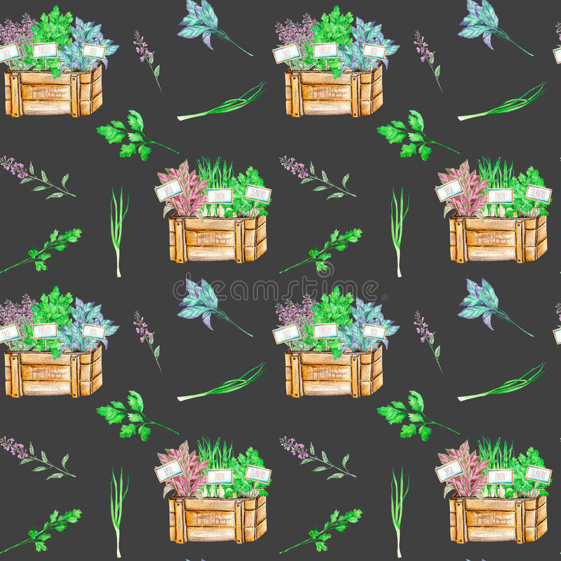 Seamless pattern with the isolated watercolor spices spicy herbs in a wood boxes. Onion green, parsley, cilantro, sage and basil, painted on a dark background royalty free illustration