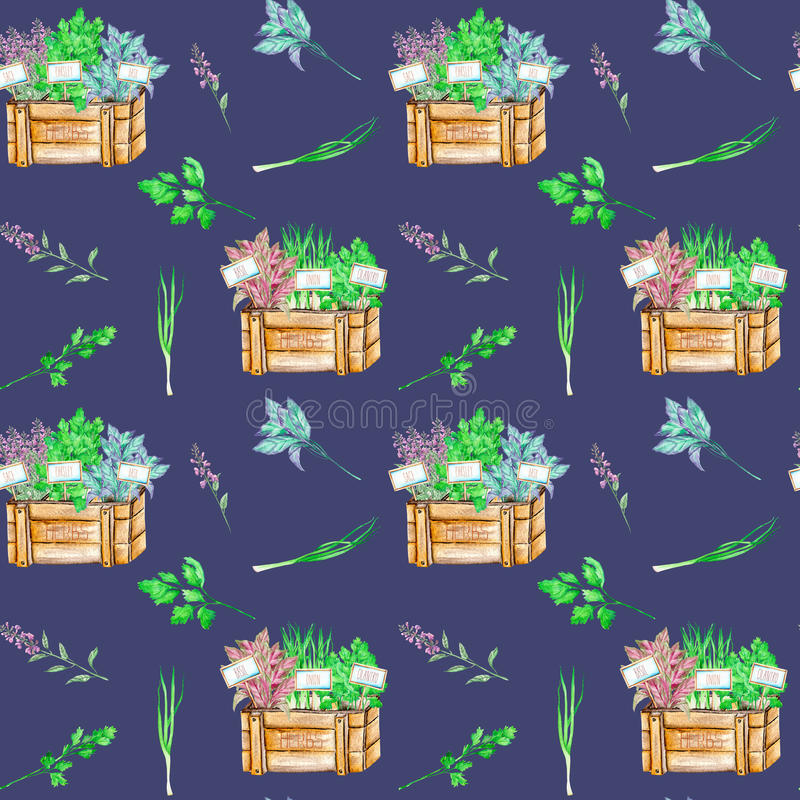 Seamless pattern with the isolated watercolor spices spicy herbs in a wood boxes. Onion green, parsley, cilantro, sage and basil, painted on a dark blue royalty free illustration