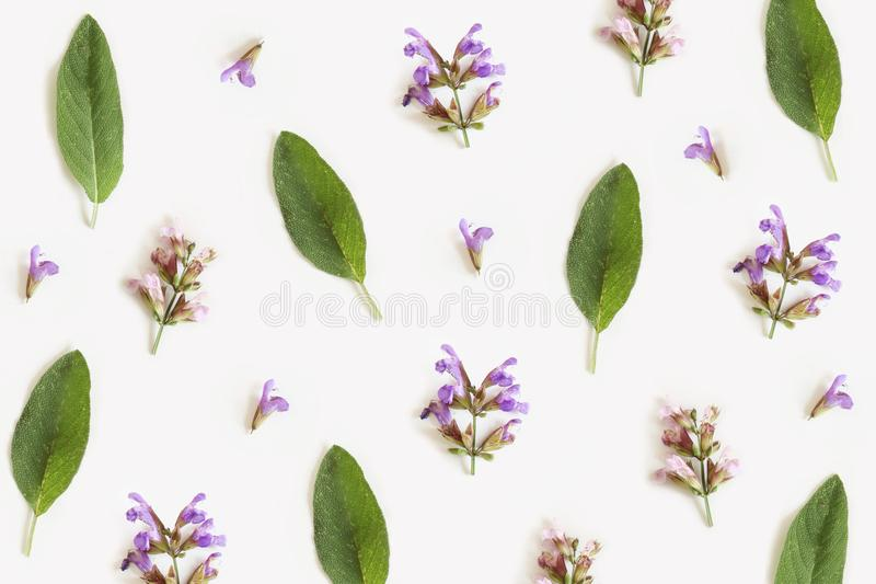 Pattern from leaves and flowers of sage isolated on white background, flat lay, top view. The concept of spring royalty free stock photography