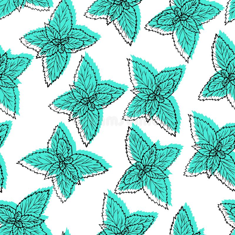 Seamless pattern with leaves mint. Hand drawn black line plant on white background with green. stock illustration