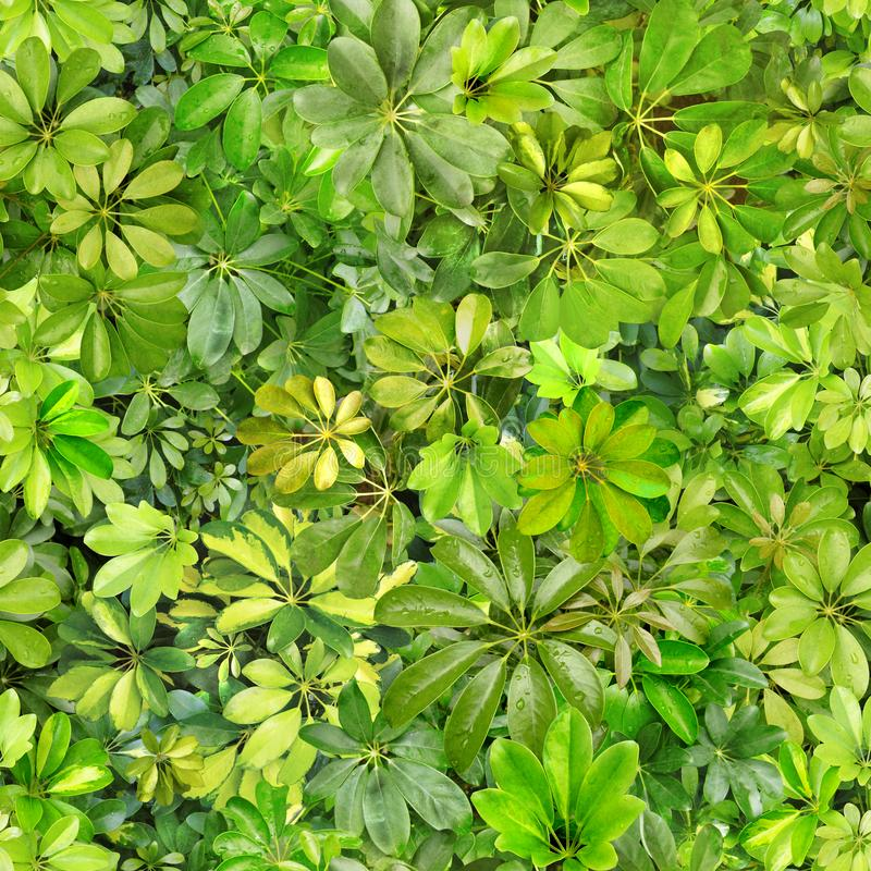 Seamless pattern, leaves, summer, green, heat, flora, wallpaper pattern, pattern for textiles, postcard, nobody, image, photo, des. Seamless pattern from summer royalty free stock image